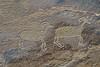 Petroglyphs / Nine Mile Canyon
