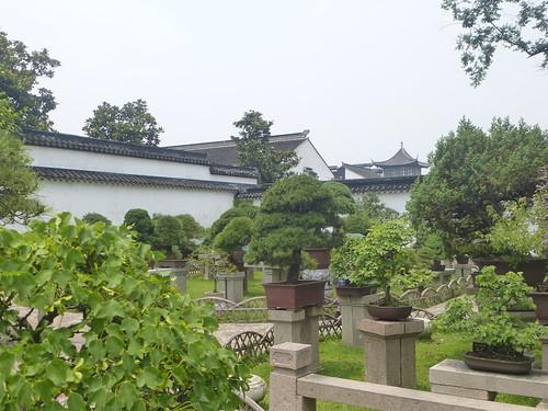 Jiangsu-Suzhou-Jardin Administrateur (41)