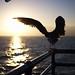 Dancing Seagull by Maëlick