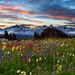 Mount Rainier Looking Towards Tatoosh Range by kevin mcneal