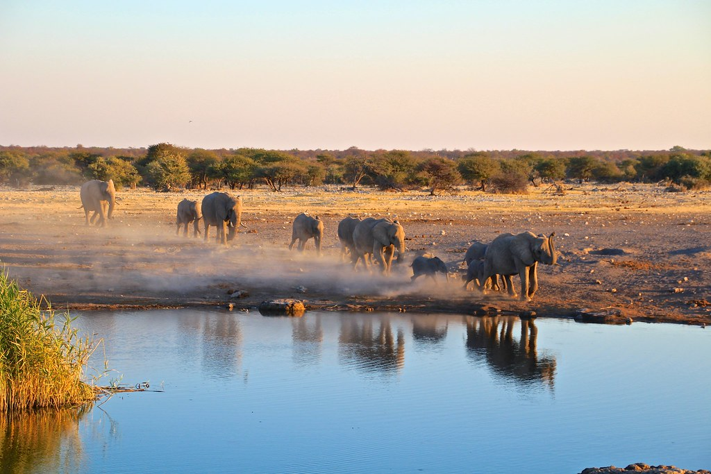 Top 5 Safaris in Africa - DNM List