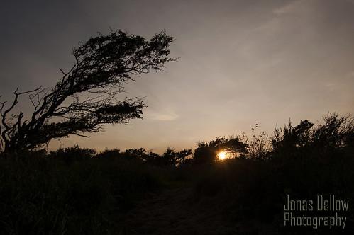 ireland sunset sun tree silhouette dark shadows donegal jonasdellowphotography