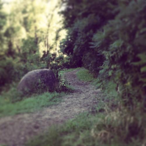 rasmussen woods1