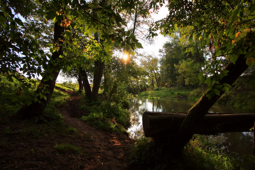 morning trees sunrise canon river landscape scenery drohiczyn cesarz marcelxyz