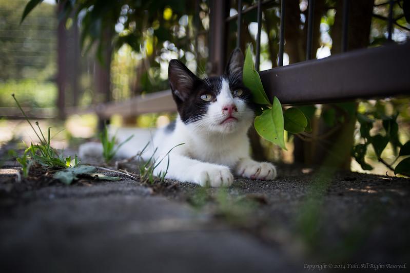 stray kitten 1