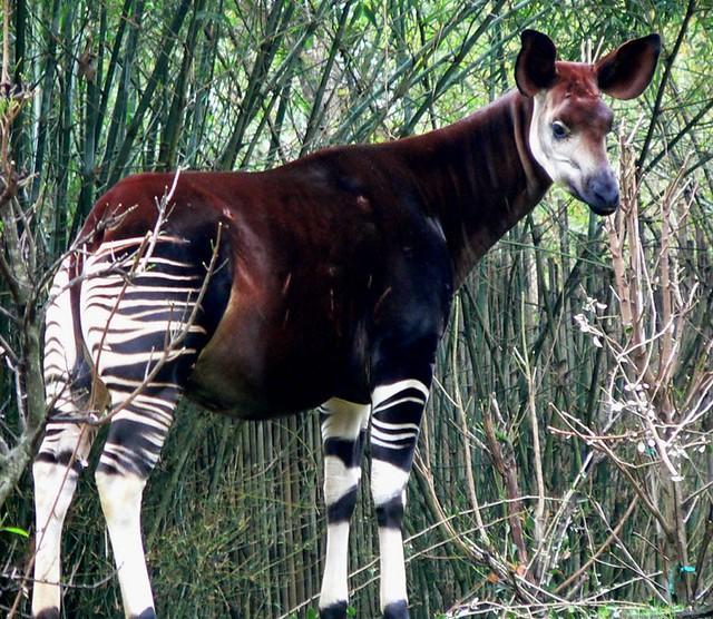 animales28