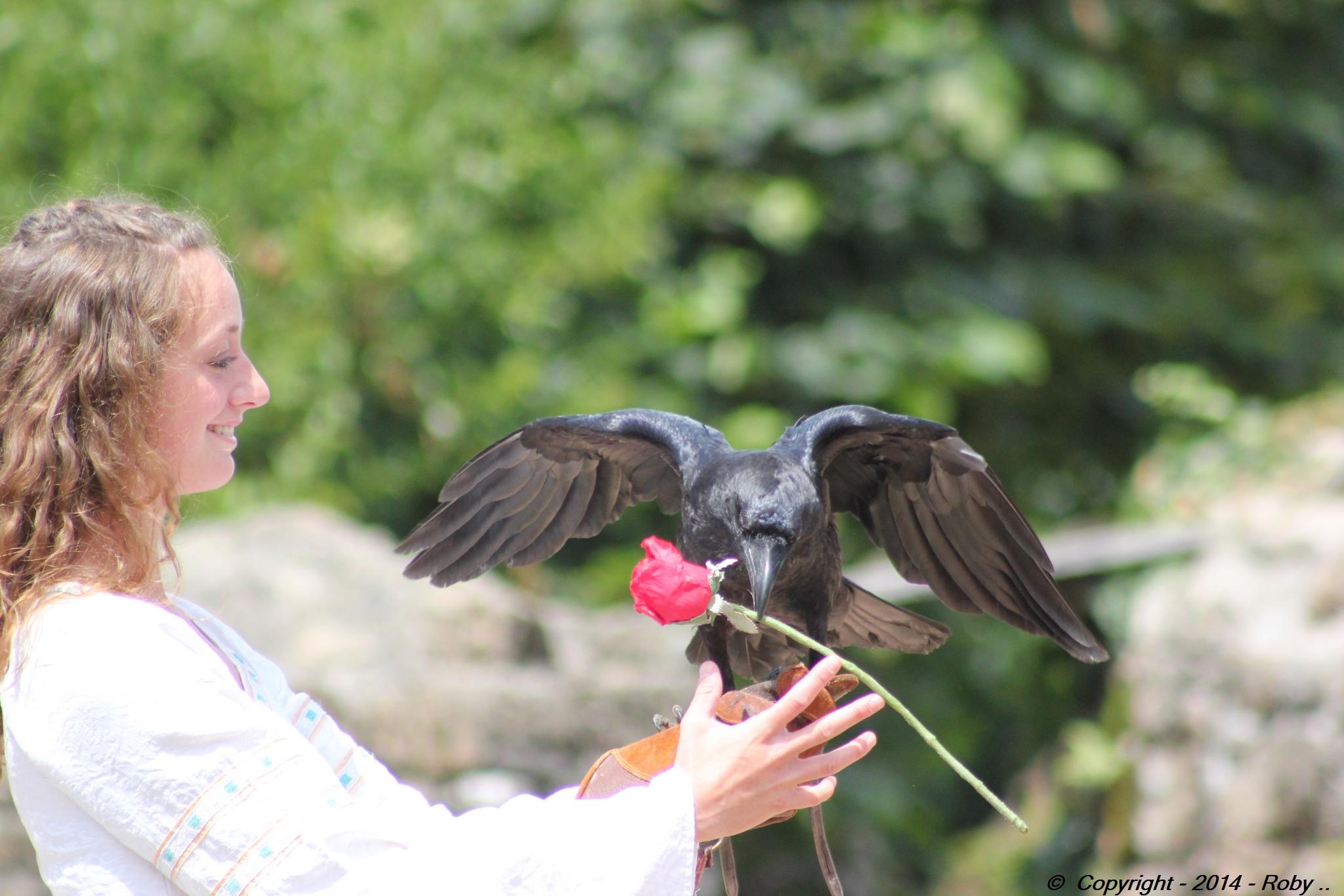 la belle et le corbeau