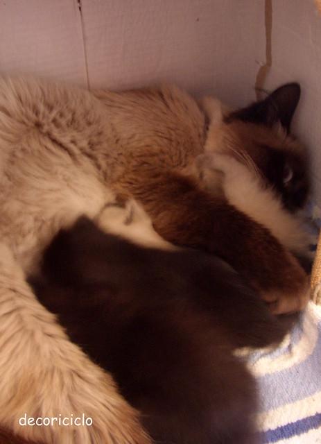 gattini seconda settimana 5