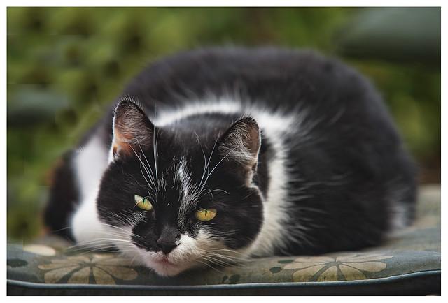 cat cold medicine walmart