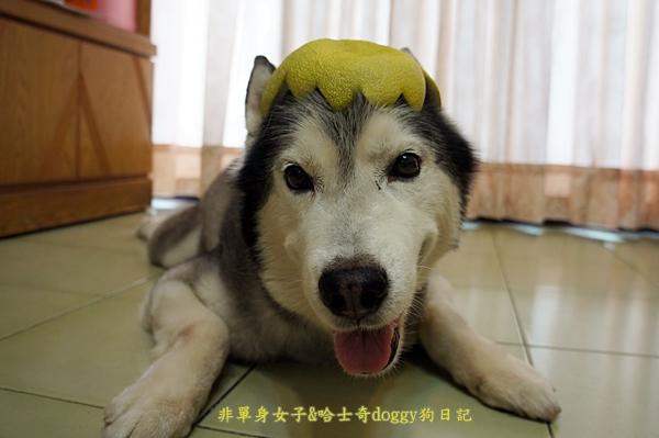 玉兔月餅柚子10