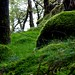 Moss covered rocks by dan.kristiansen