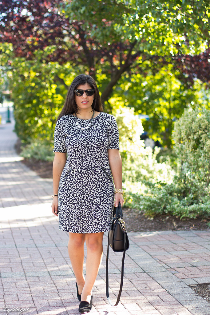 leopard dress, black bag, ferragamo pumps.jpg