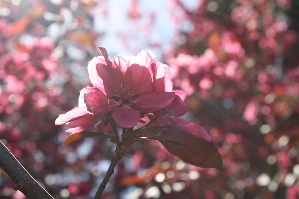 SF Botanical Garden Photo Walk - Erin