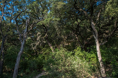 Forest - O.P. Schnabel Park - San Antonio - Texas - 18 September 2017