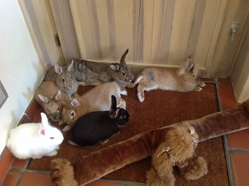 Our beautiful rabbit family!