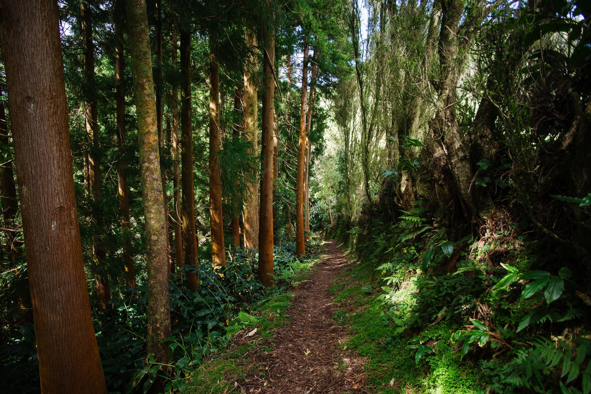 Riberia do Faial de Terra túra az erdőben