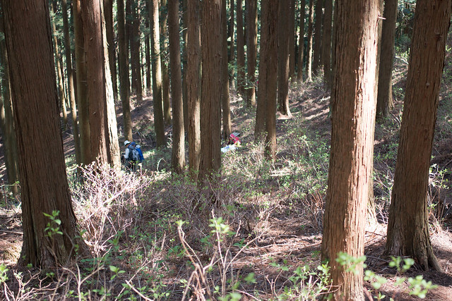 20160430-鳴神山-0258.jpg