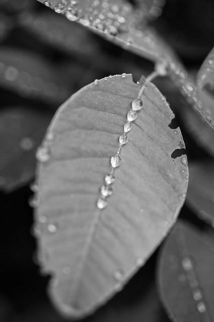 raindrops line