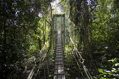 outdoor structure(0.0), flower(0.0), garden(0.0), park(0.0), woodland(1.0), rainforest(1.0), suspension bridge(1.0), tree(1.0), canopy walkway(1.0), forest(1.0), rope bridge(1.0), natural environment(1.0), jungle(1.0), bridge(1.0),