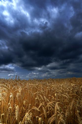 Storm above fields of malt