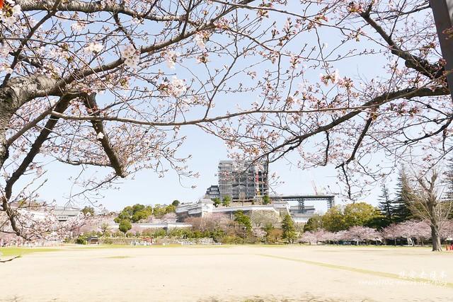 0331D6姬路、神戶_65