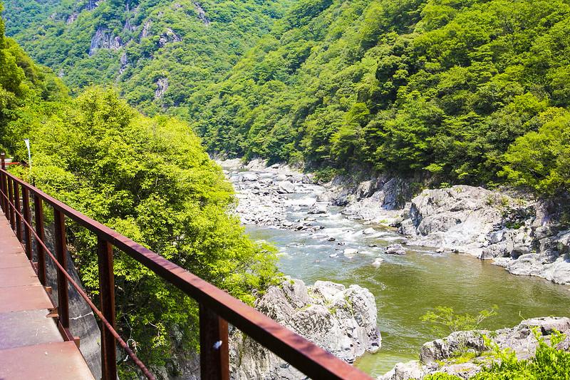 武庫川渓谷廃線ハイキング(生瀬ー武田尾)516