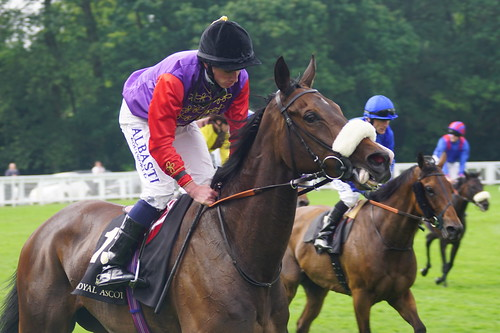 Estimate, the Queen's horse, who came second in the Ascot Gold Cup