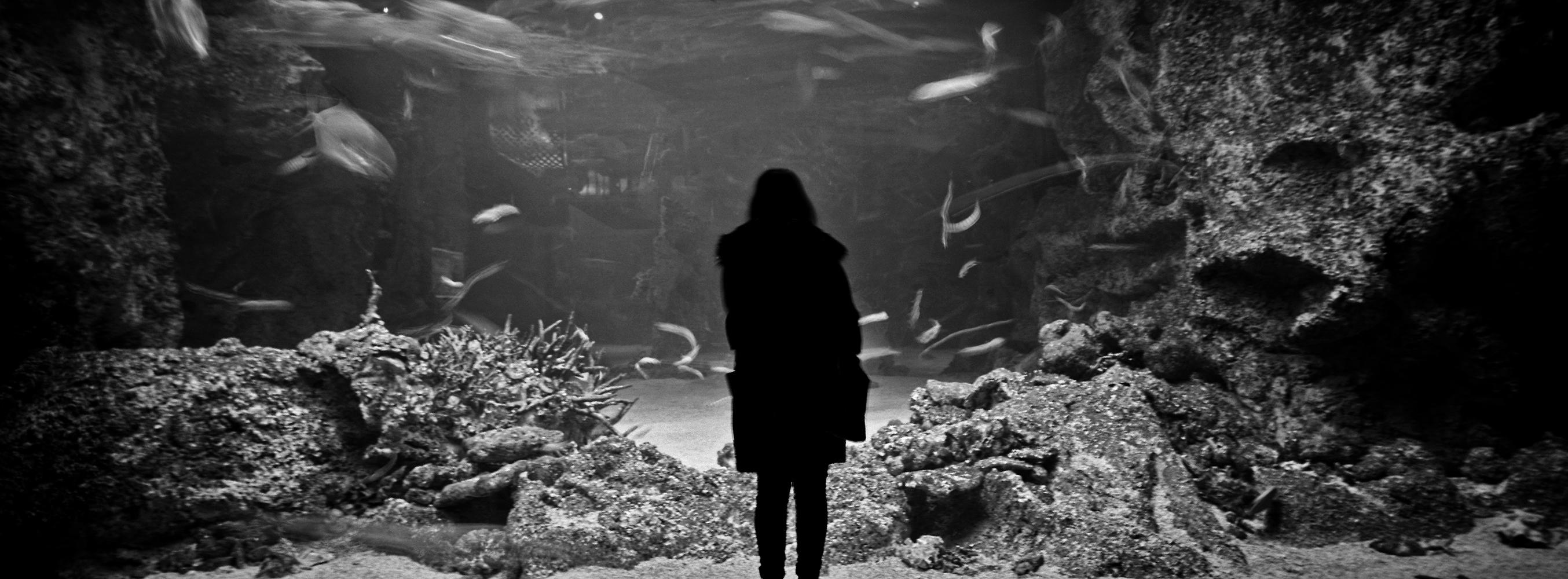 Sydney Aquarium iv