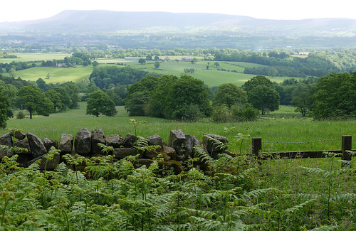 summer fern june fence landscape countryside meadows lancashire fields drystonewall pendlehill clitheroe ribblevalley kempleend