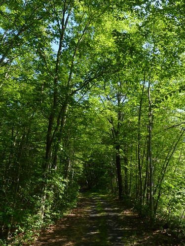summer forest newjersey woods path nj trail morriscounty jeffersontownship mahlondickersonreservation ogdenminerailroadtrail