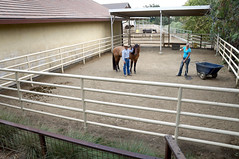 outdoor structure(0.0), stall(1.0), stable(1.0),