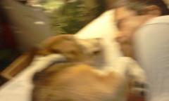 Blurry Buddy #2
