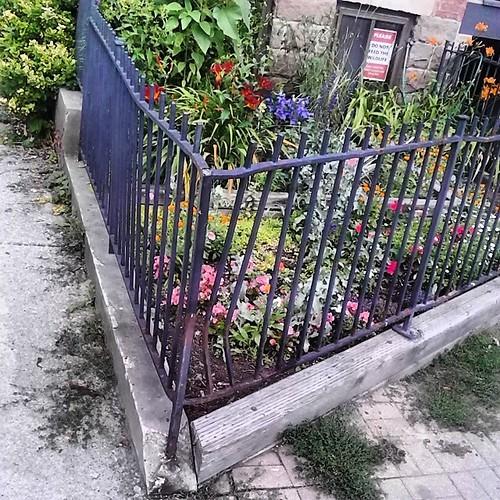 Front garden, 575 Church Street #toronto #torontophotos #churchandwellesley #churchstreet #gardens #flowers #angles