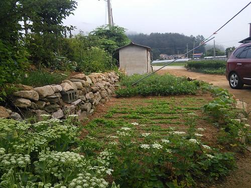 시골집풍경 | 할머니 텃밭