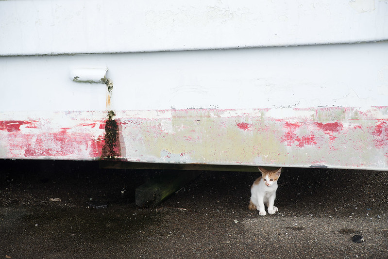 kitten under the boat