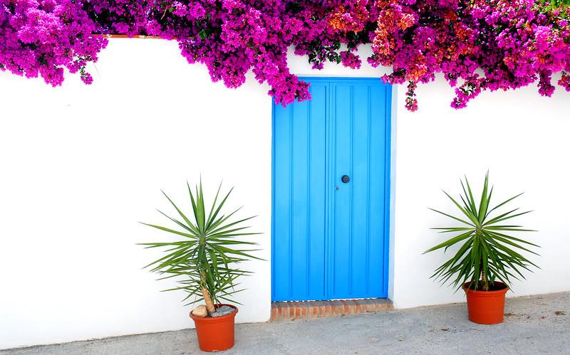 Blue Door Bougainvillea