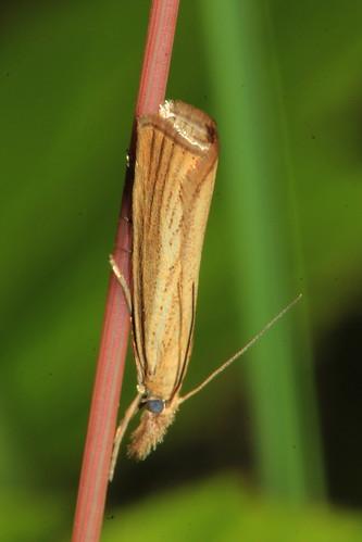 Grass Veneer 31663