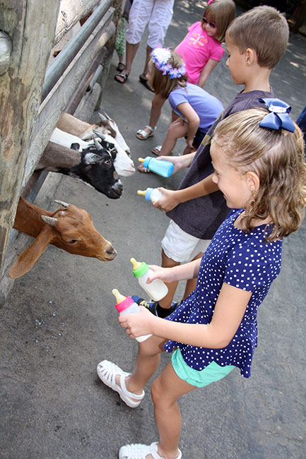 Goats_both-kids-feeding