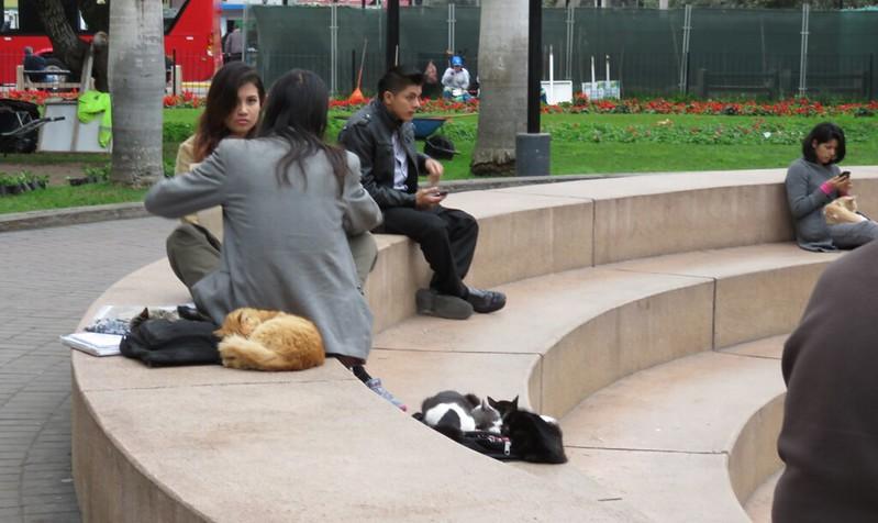 The 'cat park' in Lima, Peru.