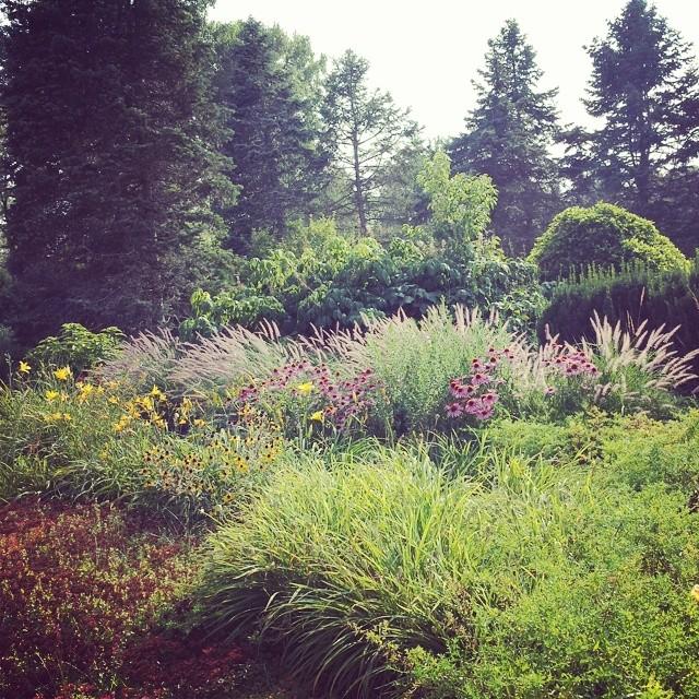 35 Landscape Matthaei Botanical Gardens Ann Arbor