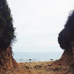 #pacific #california #dailynature #naturelovers #trail #vscocam #vsco #latergram