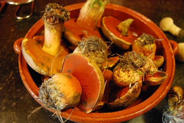 paddenstoelen, augustus 2014