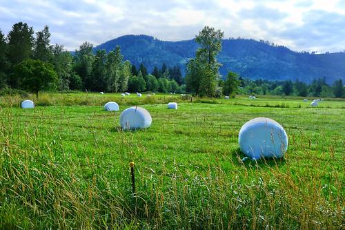 Giant marsmellos Washington Cascades 2014_0026