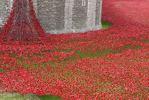 Poppies in the Moat at Tower Bridge