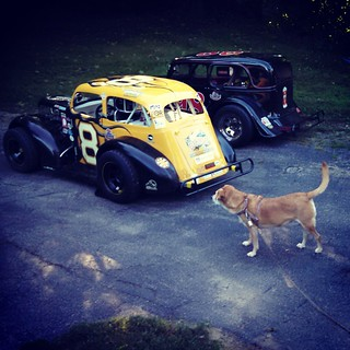 New addition has arrived. Not sure if Sophie approves yet... #dogstagram #8 #HooliganMotorsports #uslegends #houndmix #adoptdontshop #rescue #racecar