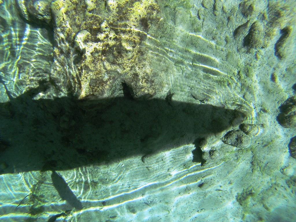 See My Kayak Shadow? Three Sisters Springs, Crystal River, Fla.