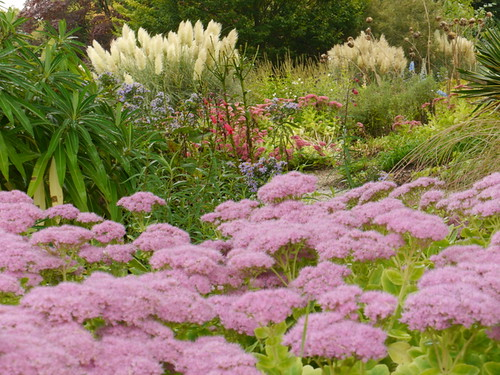 Herbaceous Borders (3)