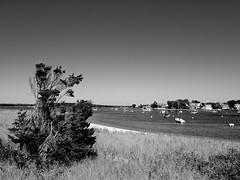 Watch Hill Harbor, Watch Hill, RI