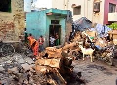 earthquake(0.0), city(0.0), waste(1.0),