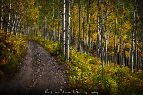 road autumn trees fall colorado aspentrees lakecreek